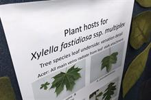 Xylella draft pest risk analysis sees need for continued statutory action